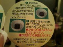 新潟市ネイルサロン aura pro ~megumi流 ネイルライフ~-20100411204022.jpg