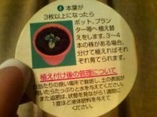 新潟市ネイルサロン aura pro ~megumi流 ネイルライフ~-20100411204206.jpg
