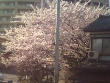 新潟市ネイルサロン aura pro ~megumi流 ネイルライフ~-20100414160440.jpg